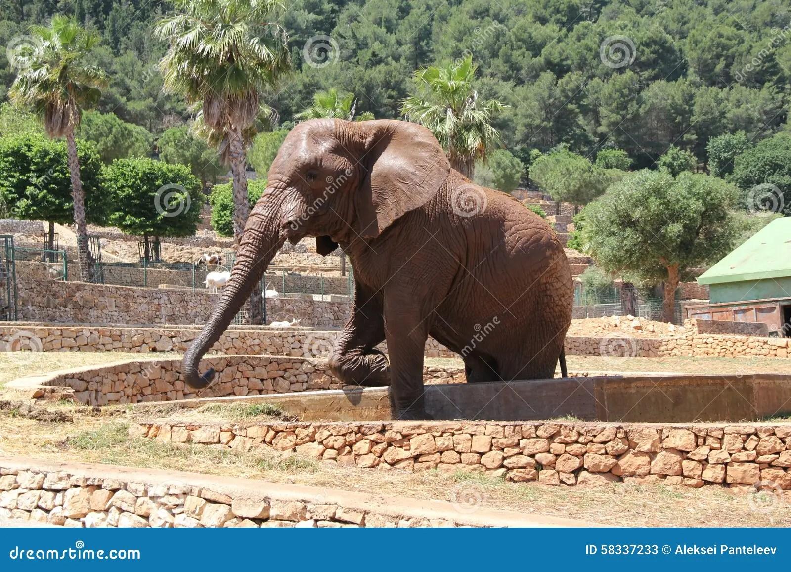 L'Italia. Puglia. Fasano. L'elefante Nello Zoosafari Immagine Stock - Immagine: 58337233