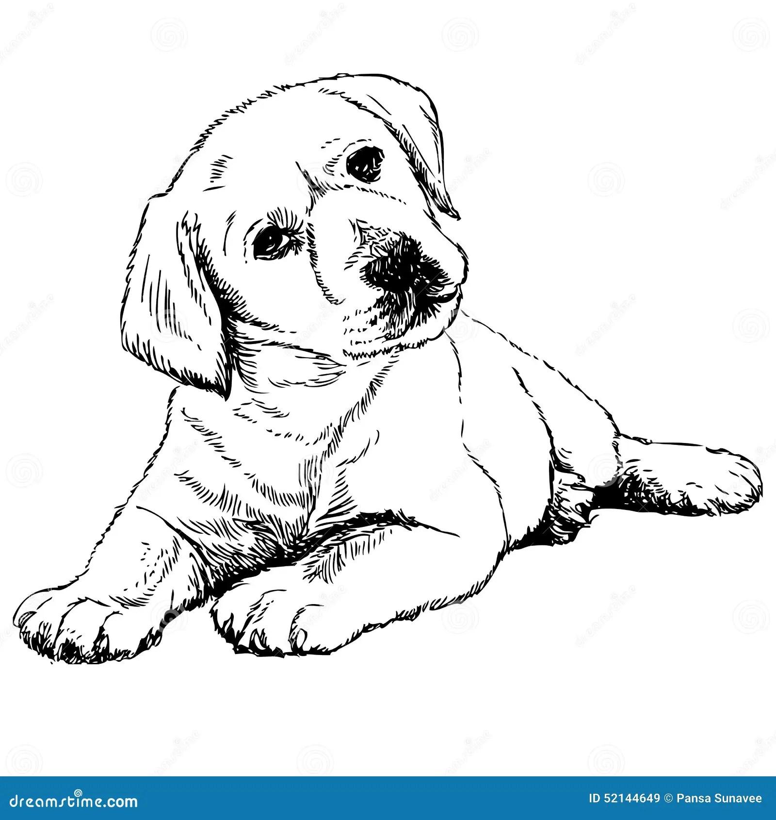 Labrador Retriever Stock Vector Illustration Of Doggy