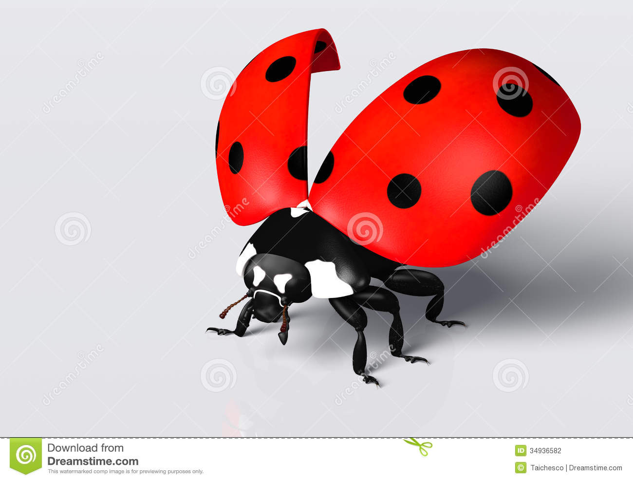 Ladybird With An Open Elytra Stock Photography
