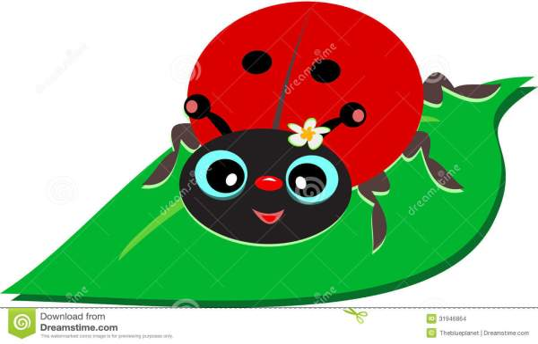 ladybug leaf stock vector