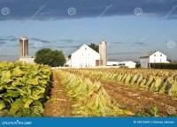 Lancaster County Tobacco Farm Stock Photo - Image: 10972692