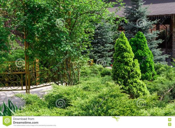 landscape design evergreen fir