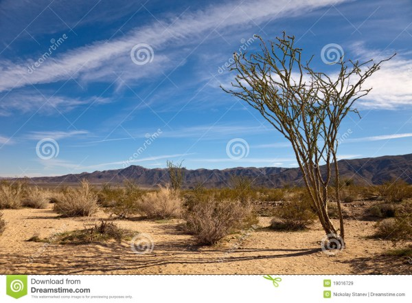 landscape with ocotillo royalty
