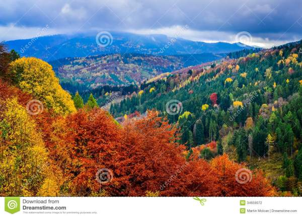 Landscape View Of Colorful Autumn Foliage Forrest