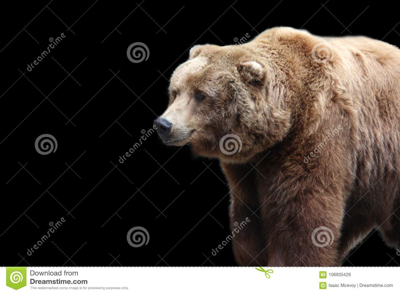 grizzly bear on a