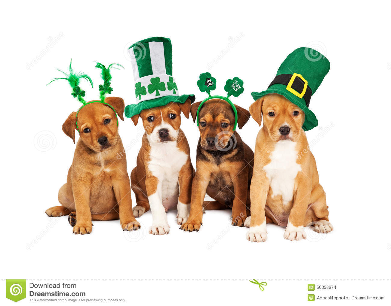 Cute Wallpaper St Pattys Day Pupppy Large St Patricks Day Dog Stock Photo Image Of Animal