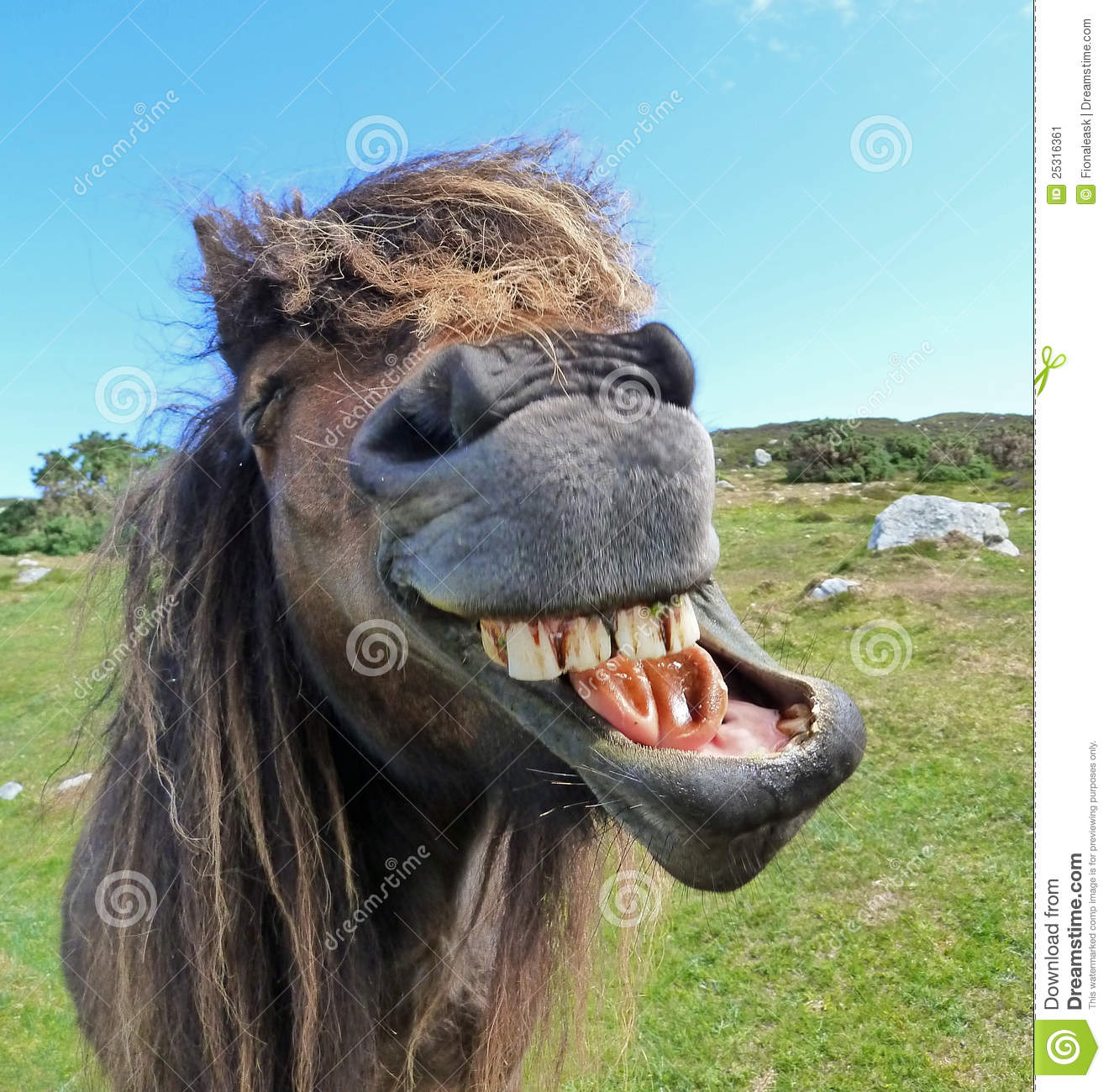 Animated Happy Birthday Wallpaper Free Download Laughing Horse Stock Image Image 25316361