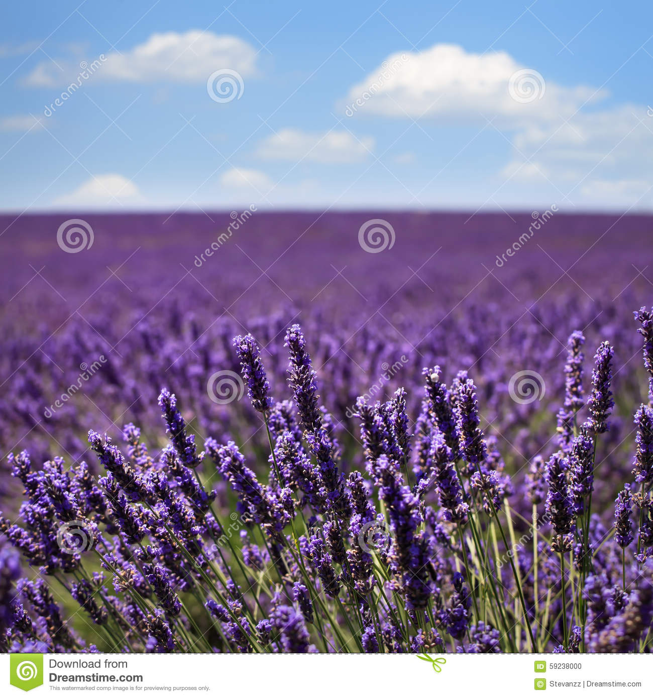 Lavender Fields France Map.Lavender Fields Provence France Map