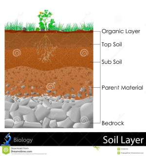 Layer of Soil stock illustration Image of diagram, root