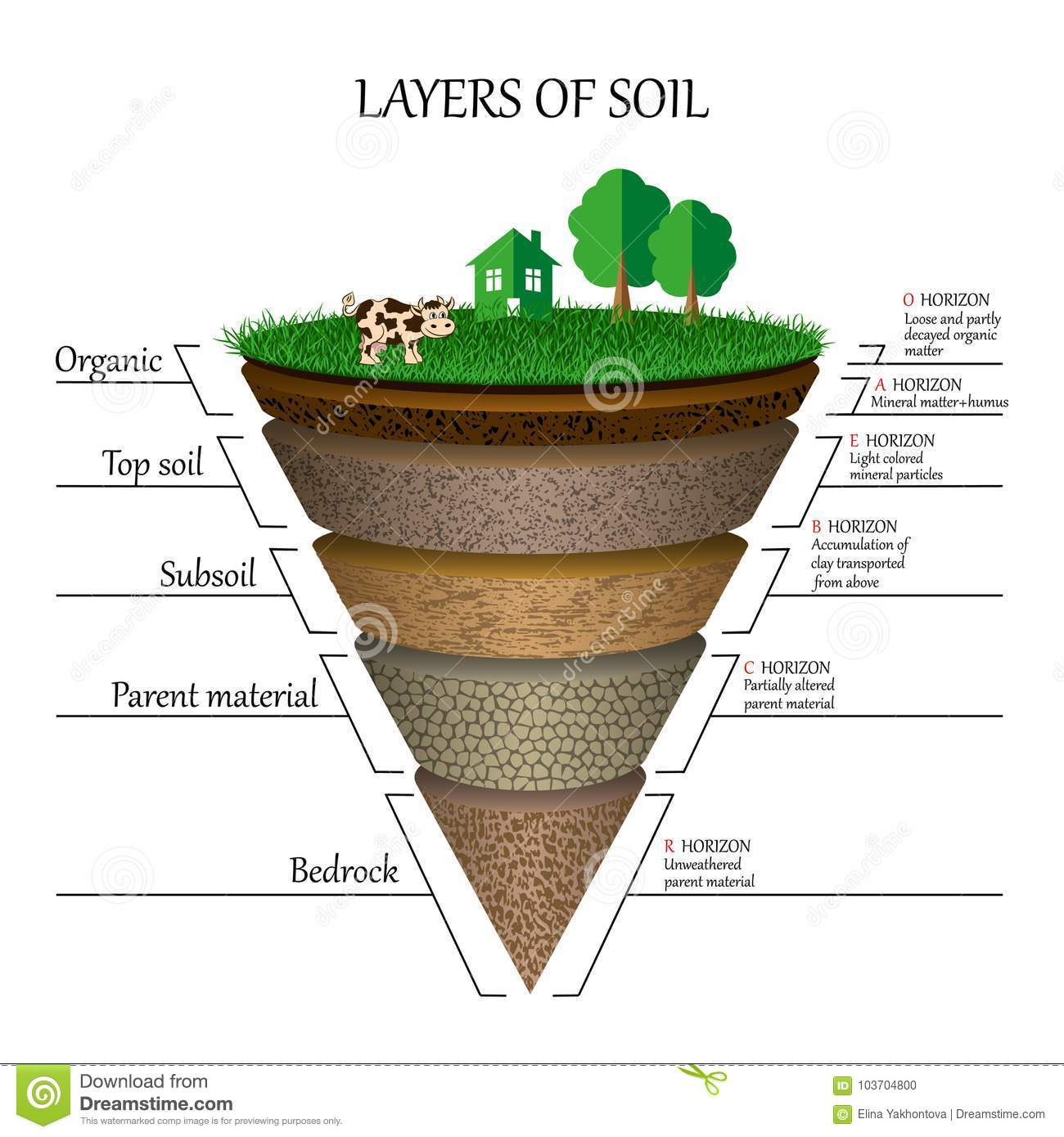 soil layers diagram pregnant dog anatomy of education mineral particles sand