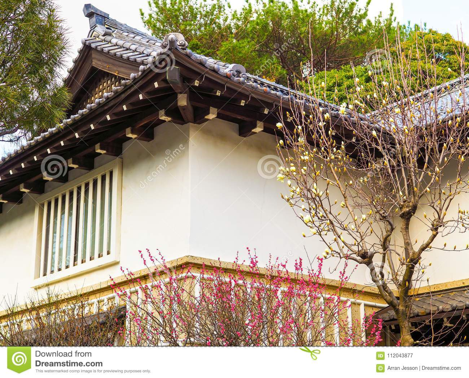 Le Ressort Du Japon Se Developpe Dans Rose Et Blanc Avec La Maison Japonaise Traditionnelle A L Arriere Plan Image Stock Image Du Japan Fleur 112043877