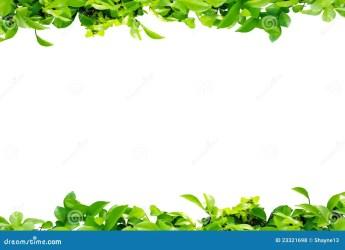 border leaf background frame leaves nature flower royalty natural