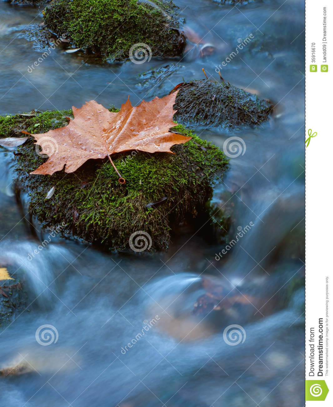 Fall Scenery Wallpapers Free Leaf At The Creek 3 Stock Photo Image Of Droplets