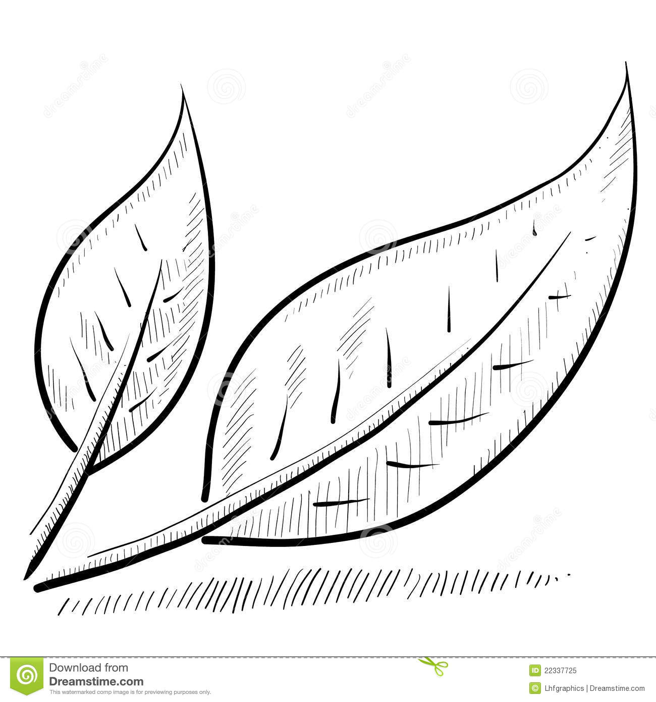 Leaf Or Nature Sketch Royalty Free Stock Photo