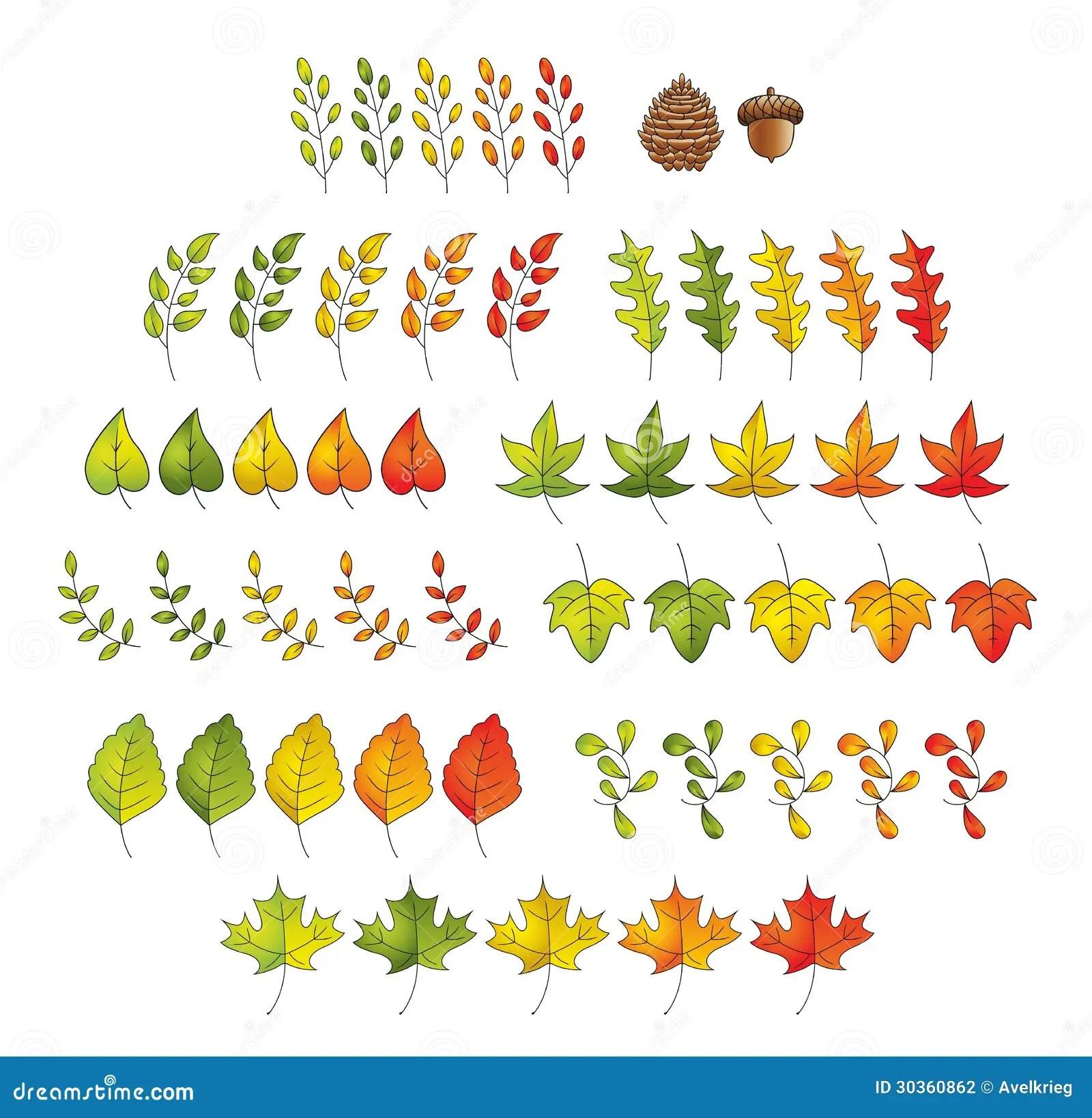 Leaf Set Stock Photography