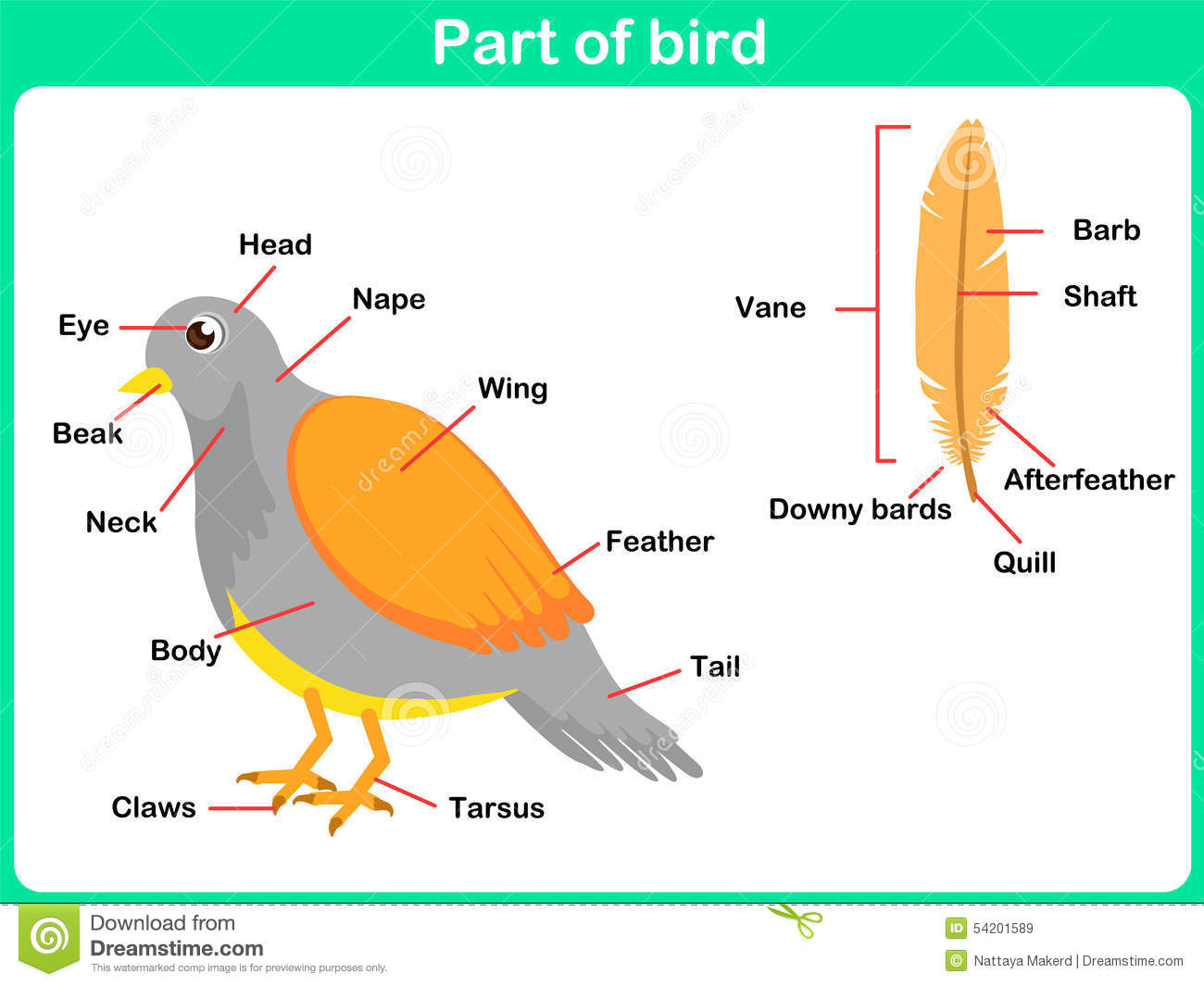 Leaning Parts Of Bird For Kids