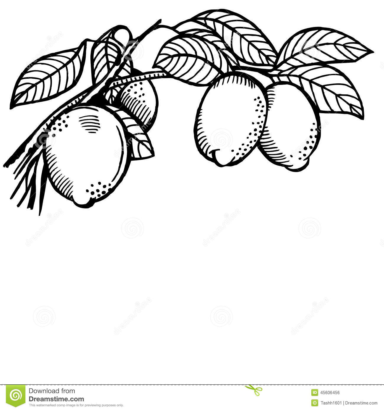 Lemon Branch Stock Vector Illustration Of Painting