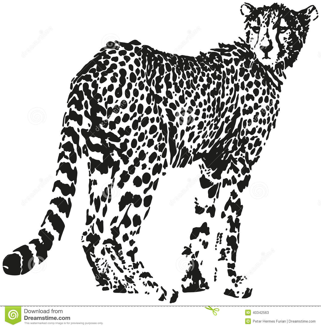 Leopard Stock Vector Illustration Of Panthera Pattern