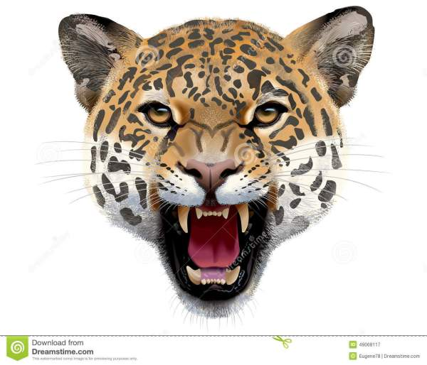Leopard Head. Illustration. Stock Vector - 49068117