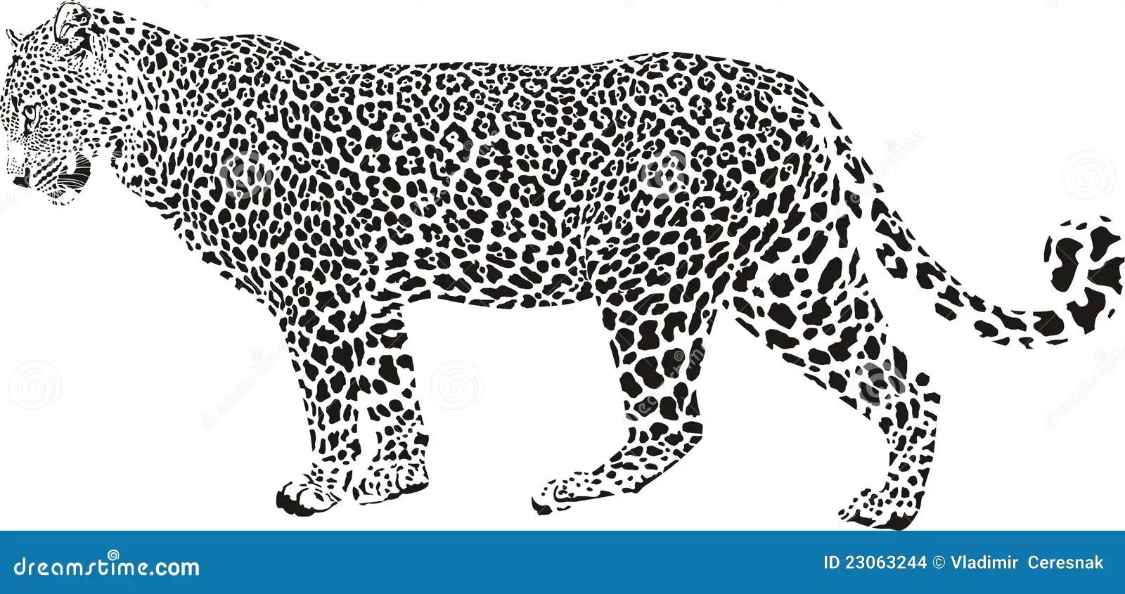 Leopard illustration stock vector. Illustration of speed