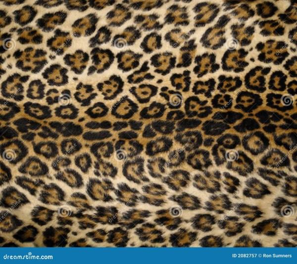 Leopard Print 2 Stock Of Mammal Furry