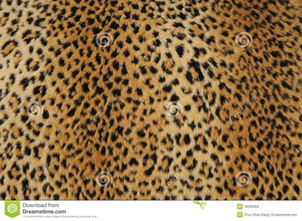 Leopard Skin Stock Of Abstract Print
