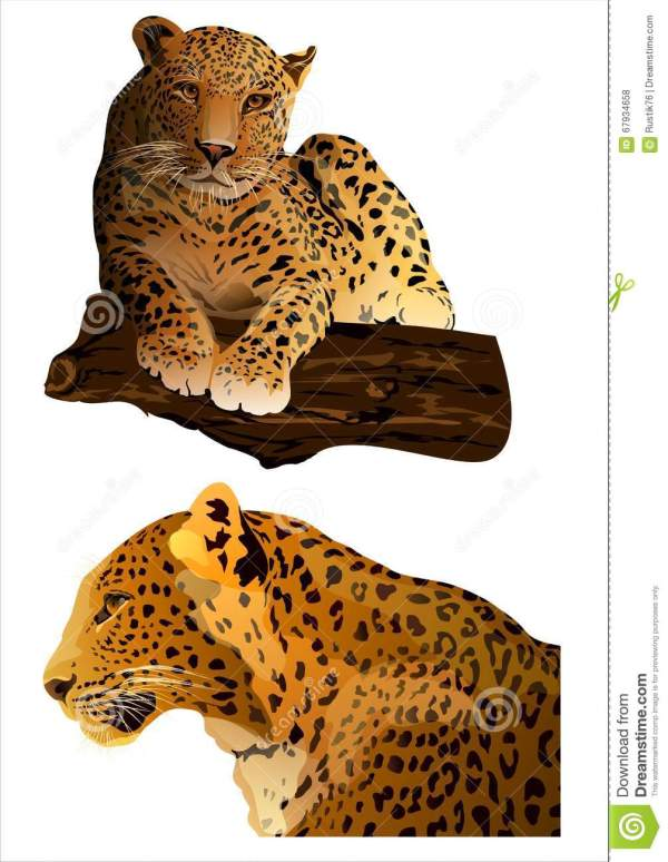 Leopard Vector . Stock Vector. Illustration Of Feline