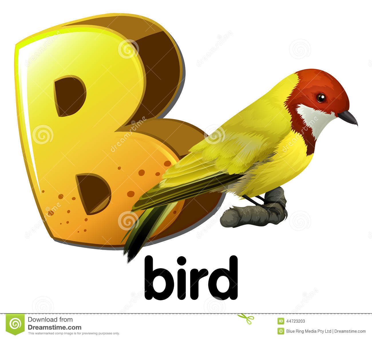 A Letter B For Bird Stock Vector Illustration Of Graphic