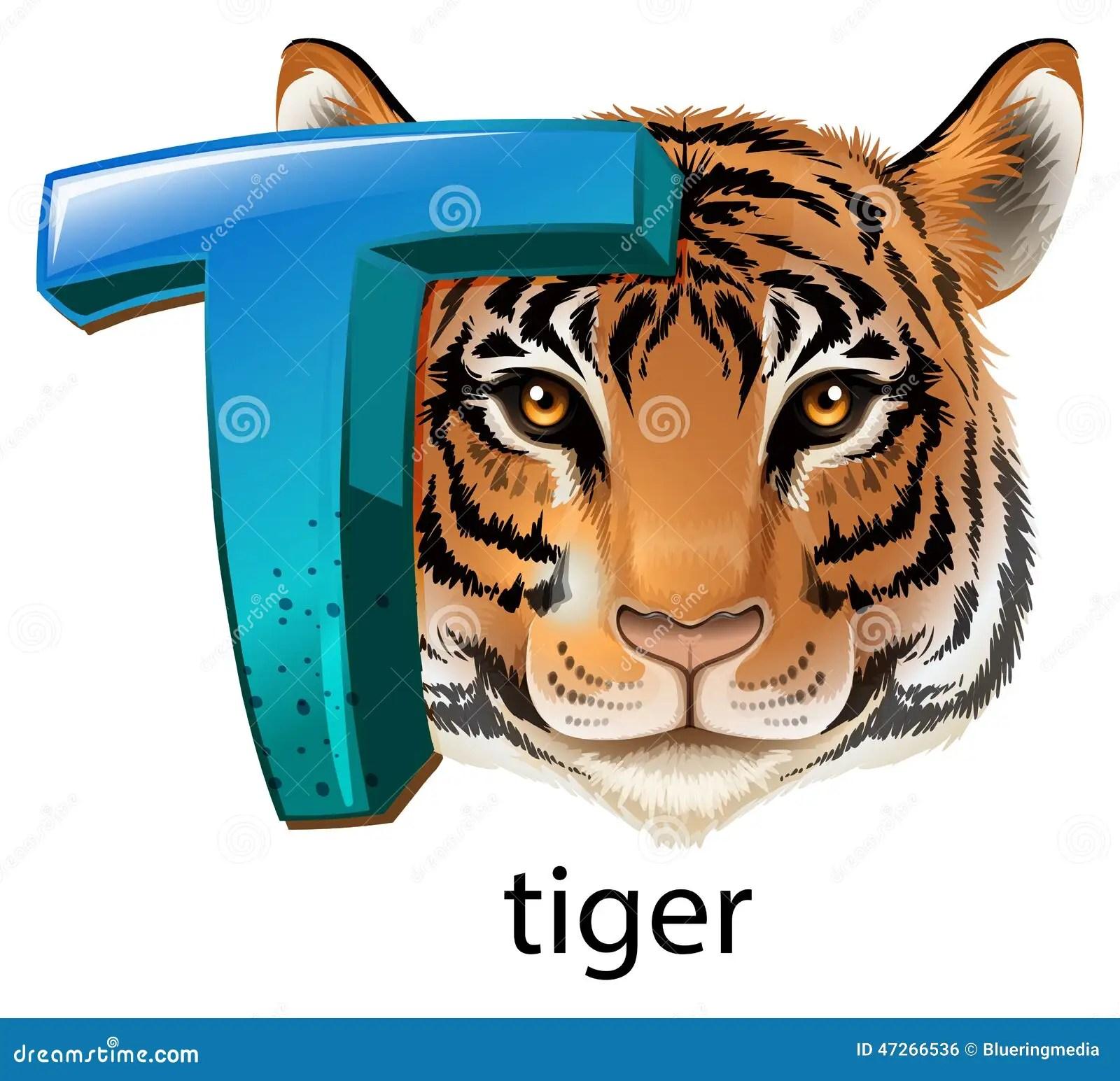 A Letter T For Tiger Stock Vector Illustration Of Letter