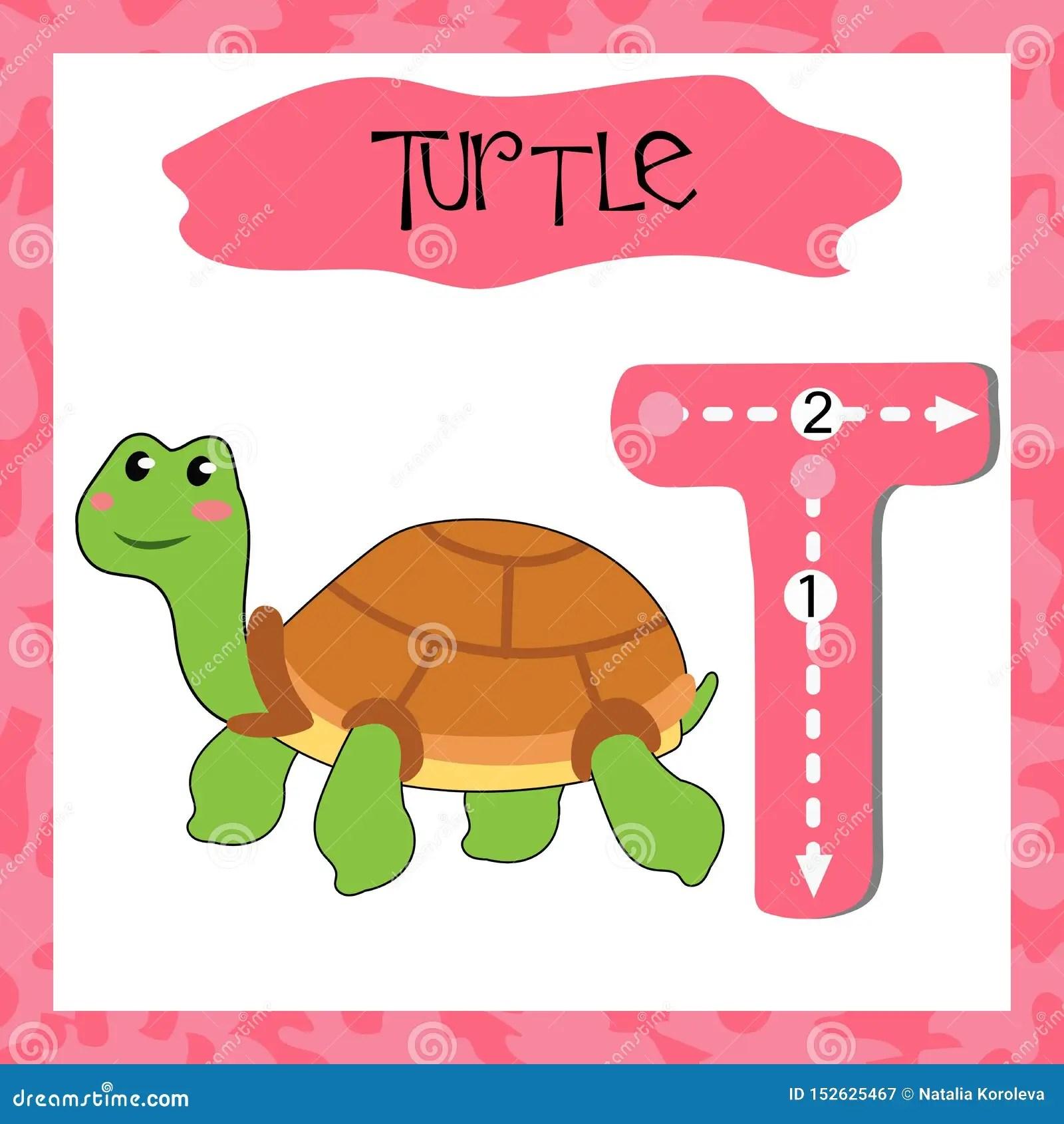 English Alphabet Letter T For Teaching Children To Read