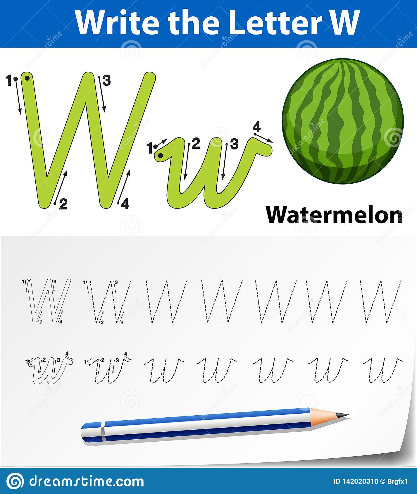 Letter W Tracing Alphabet Worksheets Stock Vector