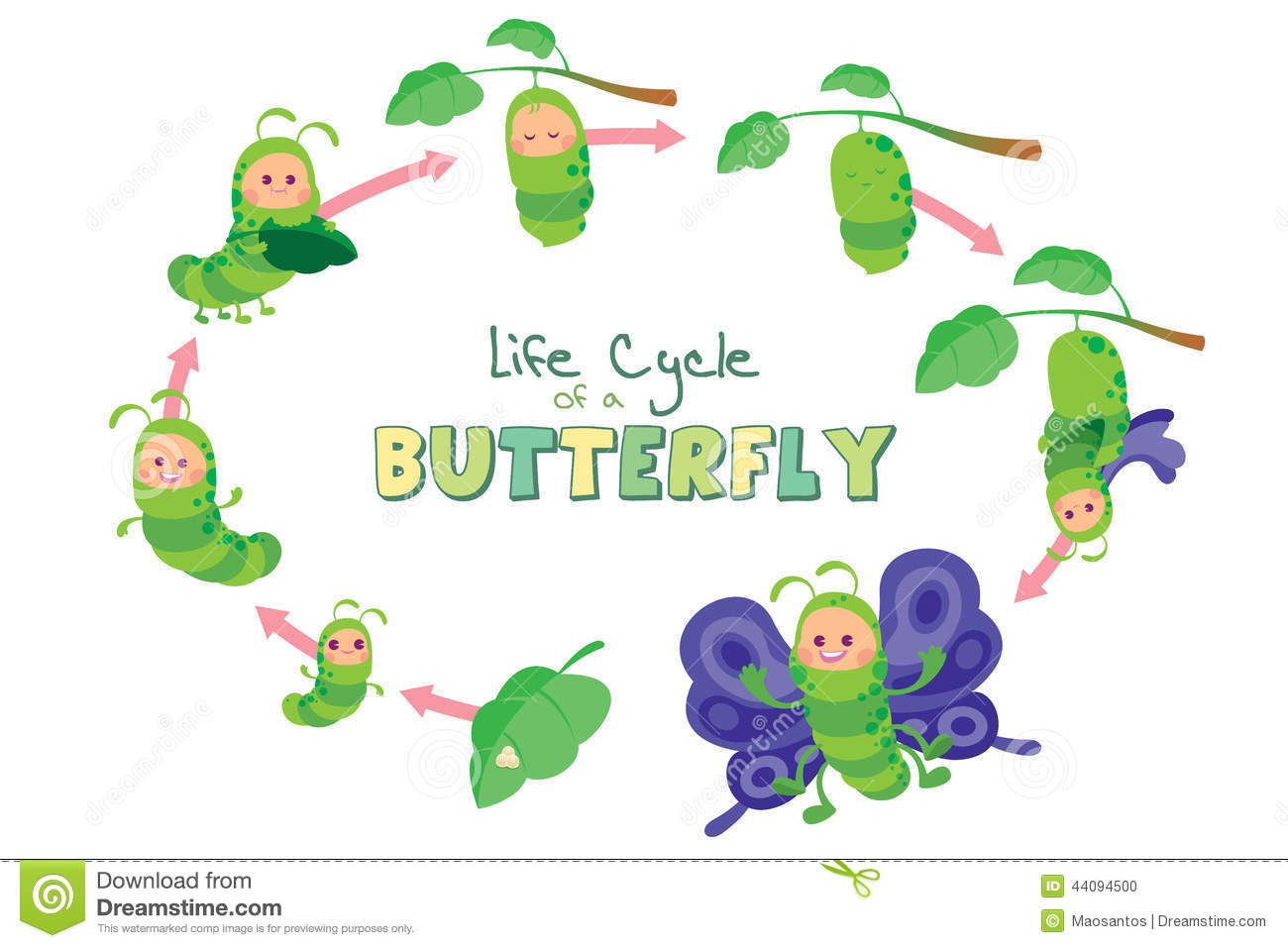 Life Cycle Of A Butterfly Stock Illustration