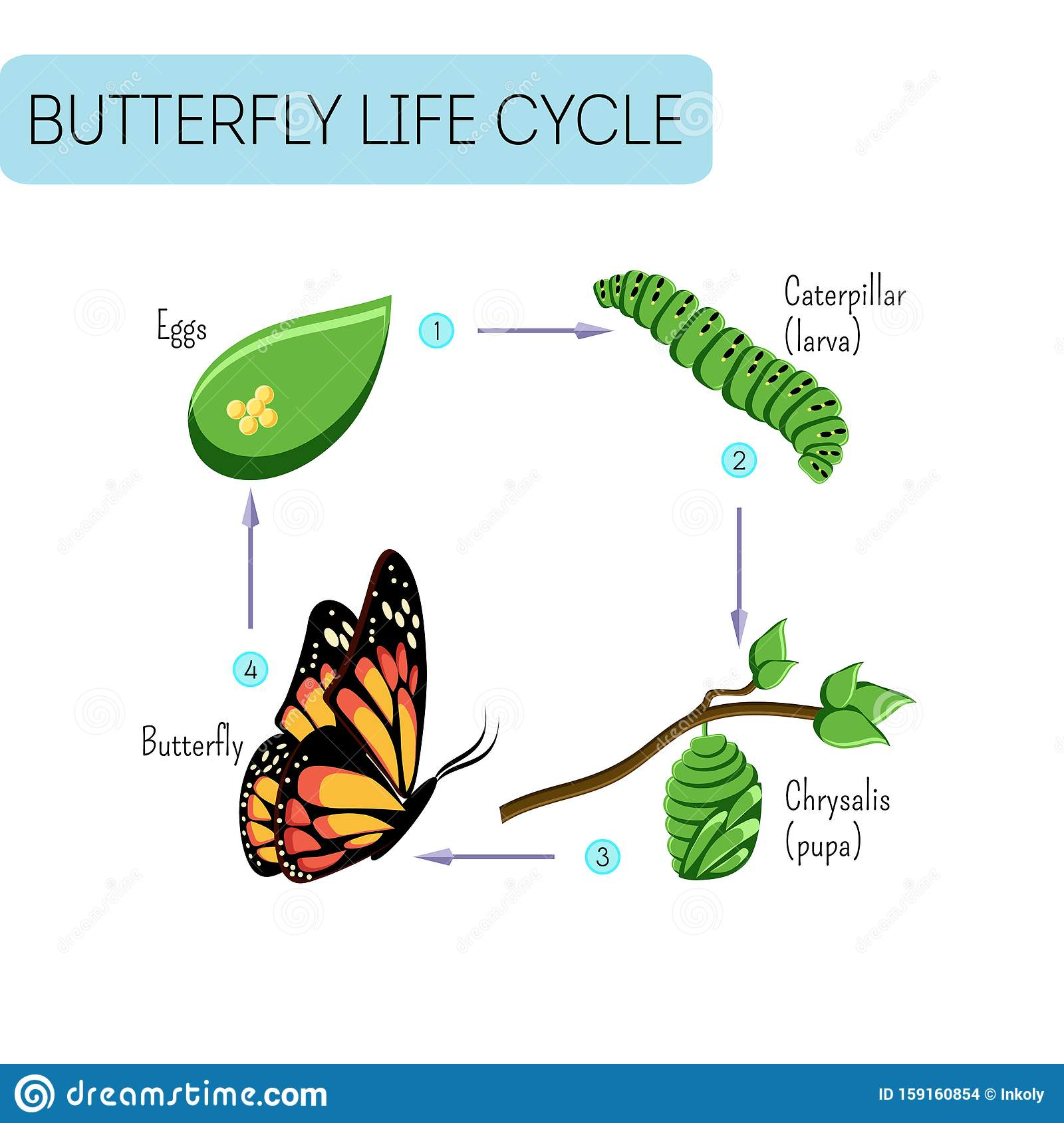 Life Cycle Of Butterfly Stock Illustration Illustration