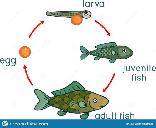 small resolution of life cycle of fish sequence of stages of development of fish from egg roe to