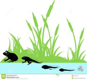 Life cycle of frog stock vector Image of evolution  44916778