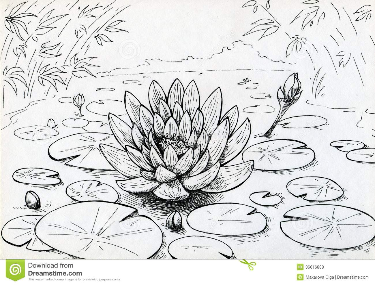 Lily Flower On The Swamped Pond Stock Illustration