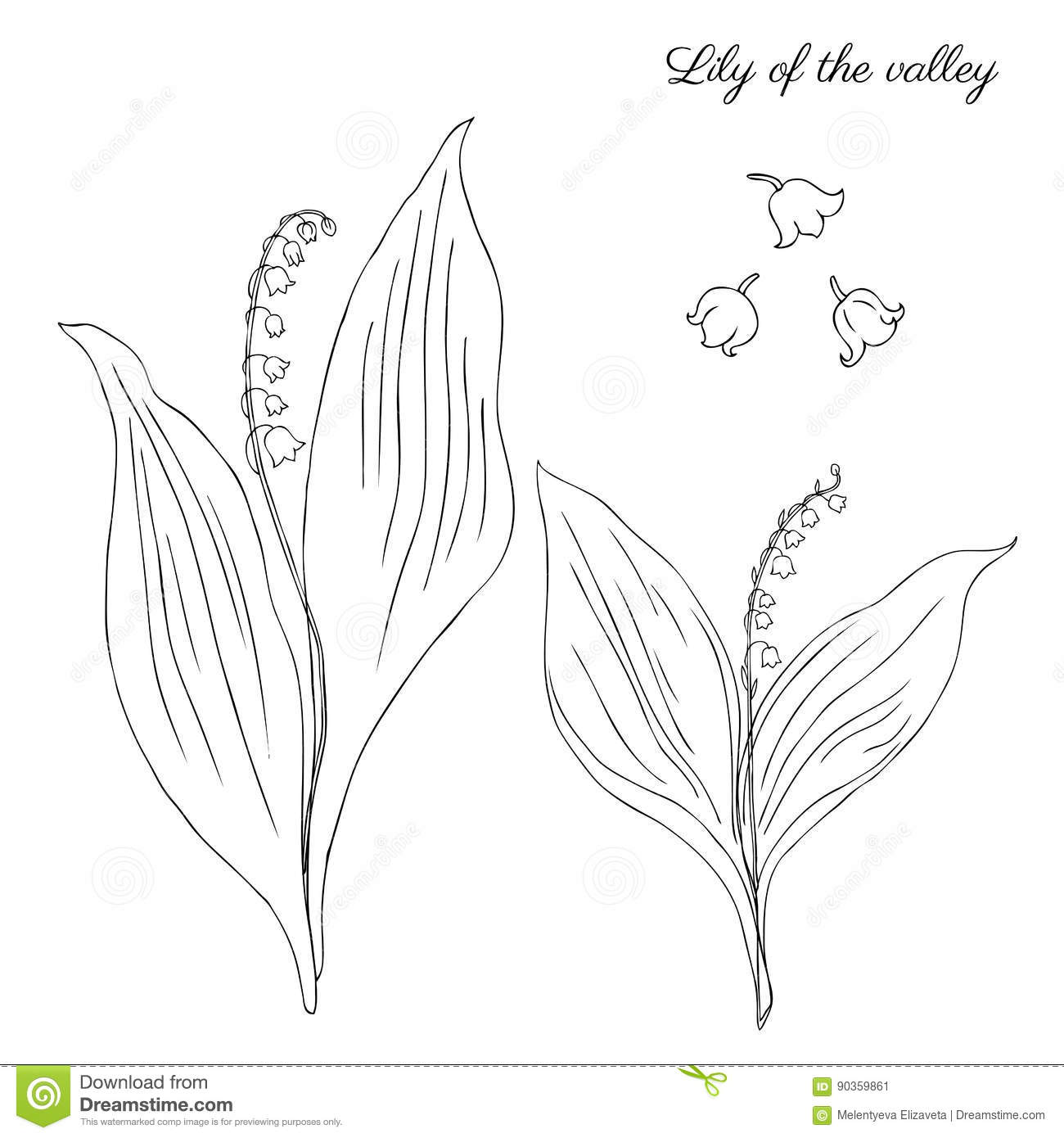 black and white lily of the valley illustration