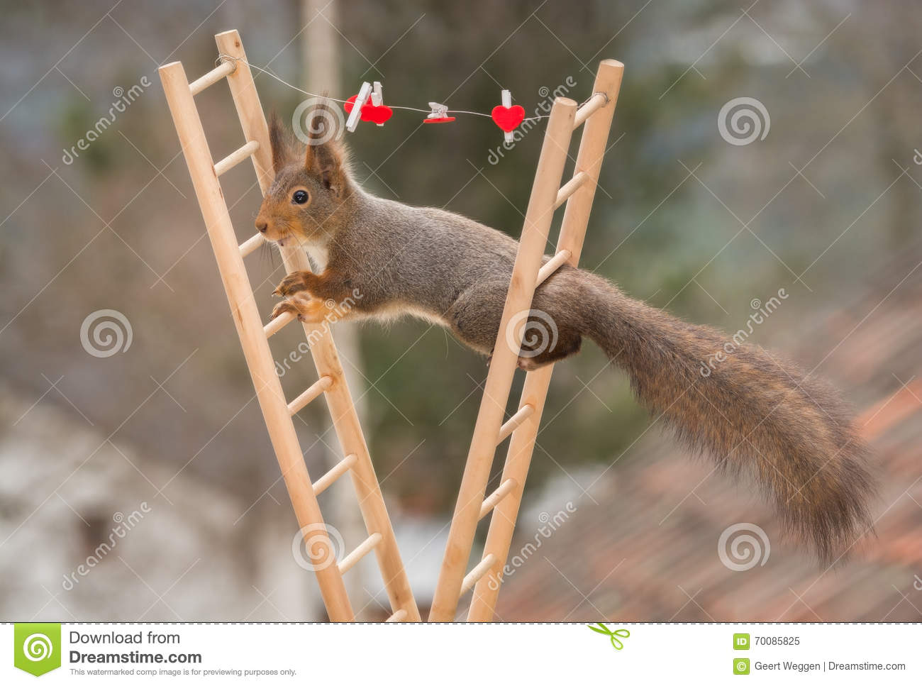 hight resolution of red squirrel standing between 2 stairs with wire and hearts
