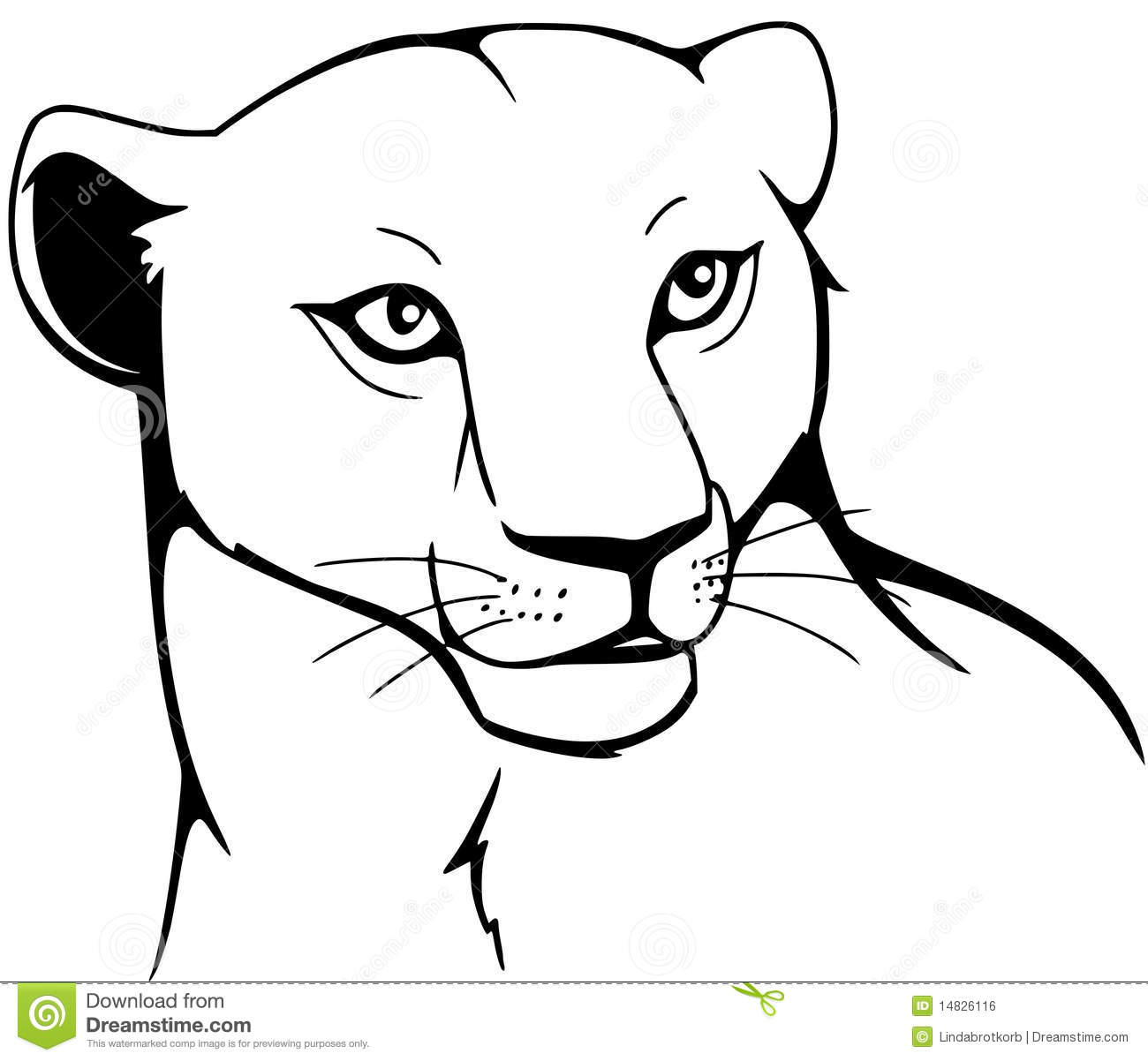 Lioness Stock Vector Illustration Of Angry Cougar Mane