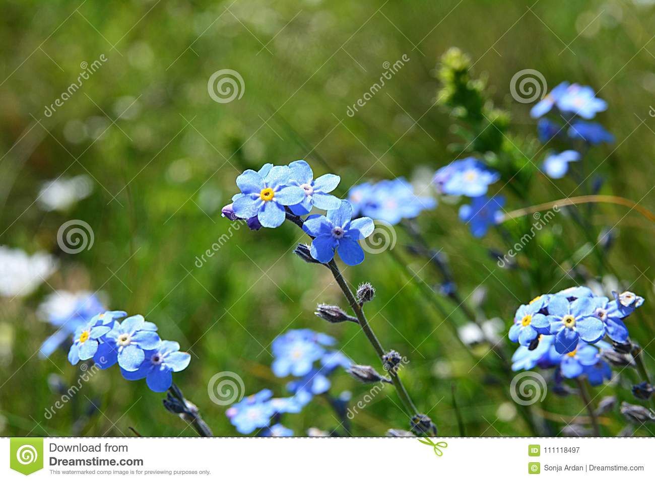 small blue flowers swaying