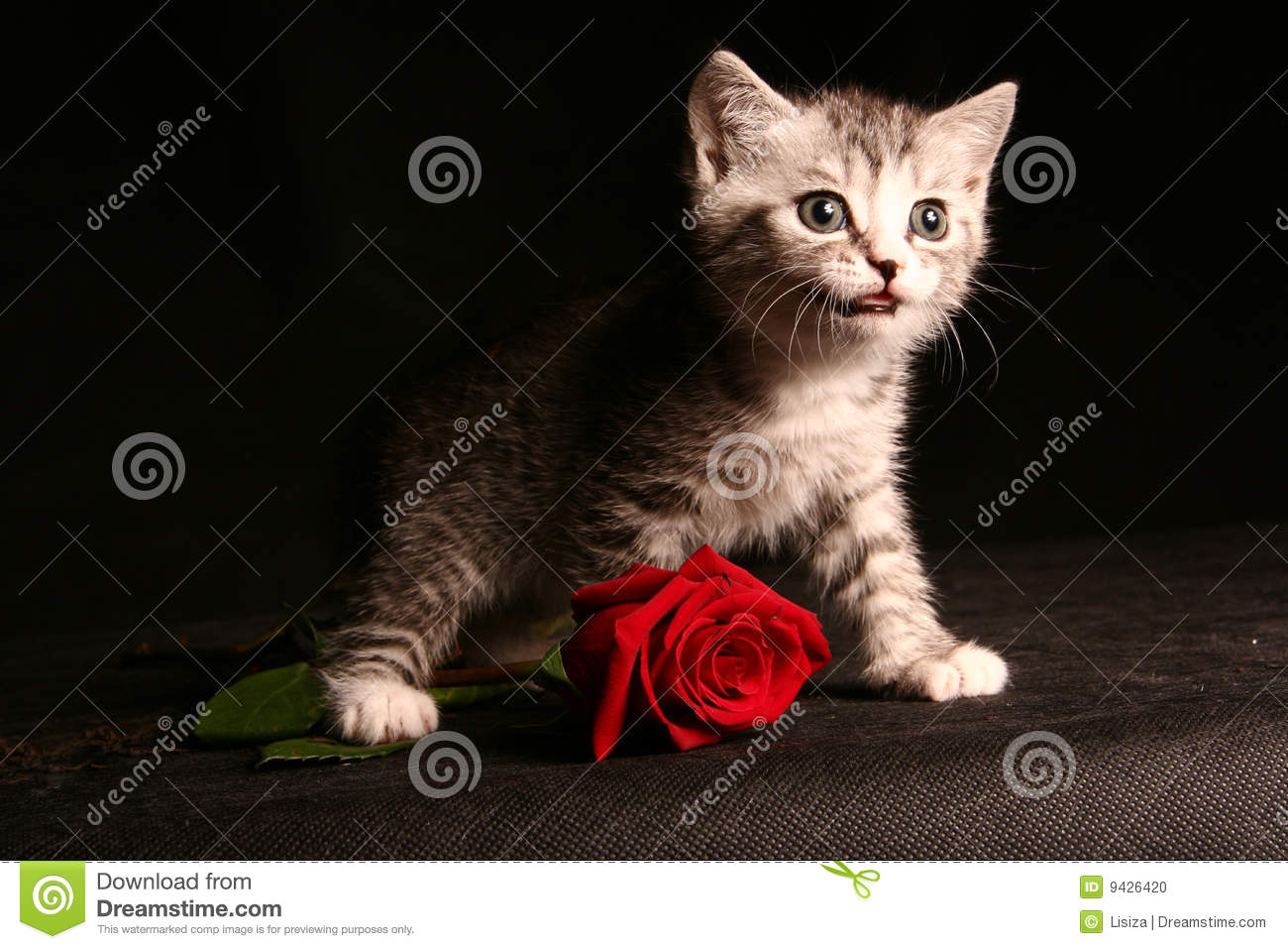 3d Cat Wallpapers Download Little Cat With Red Rose Stock Photo Image 9426420