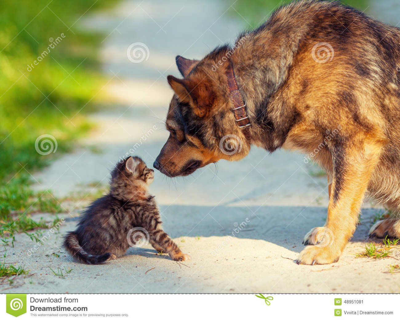 Little Kitten And Big Dog Stock Image Image Of Cute