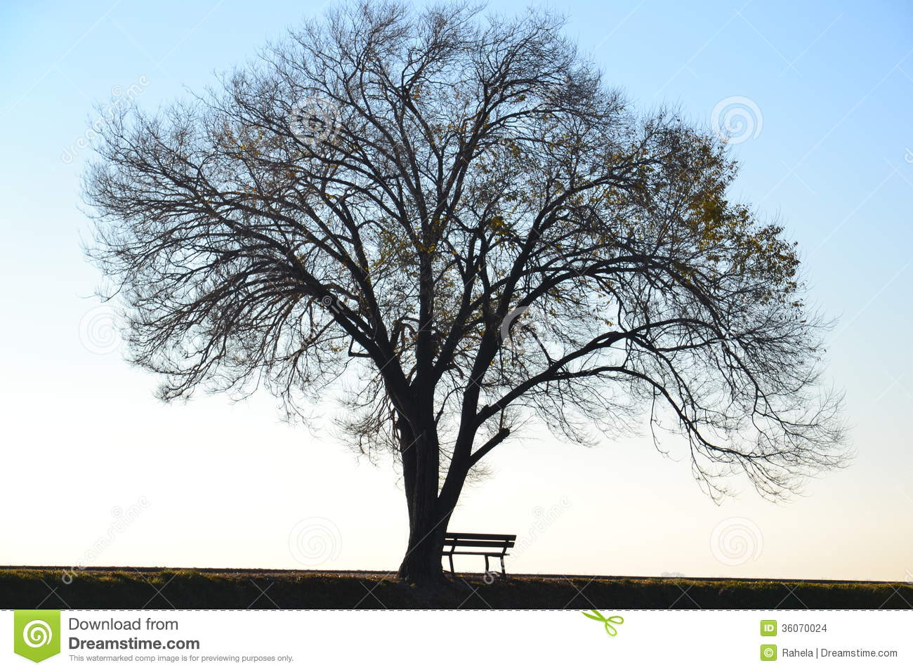 Fall Path Wallpaper Lonely Tree And Bench Stock Photo Image Of Empty