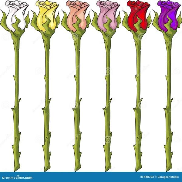 Long Stem Roses Stock - 448703