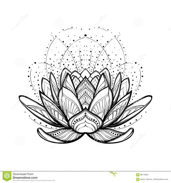 Lotus Flower Intricate Stylized Linear Drawing Isolated
