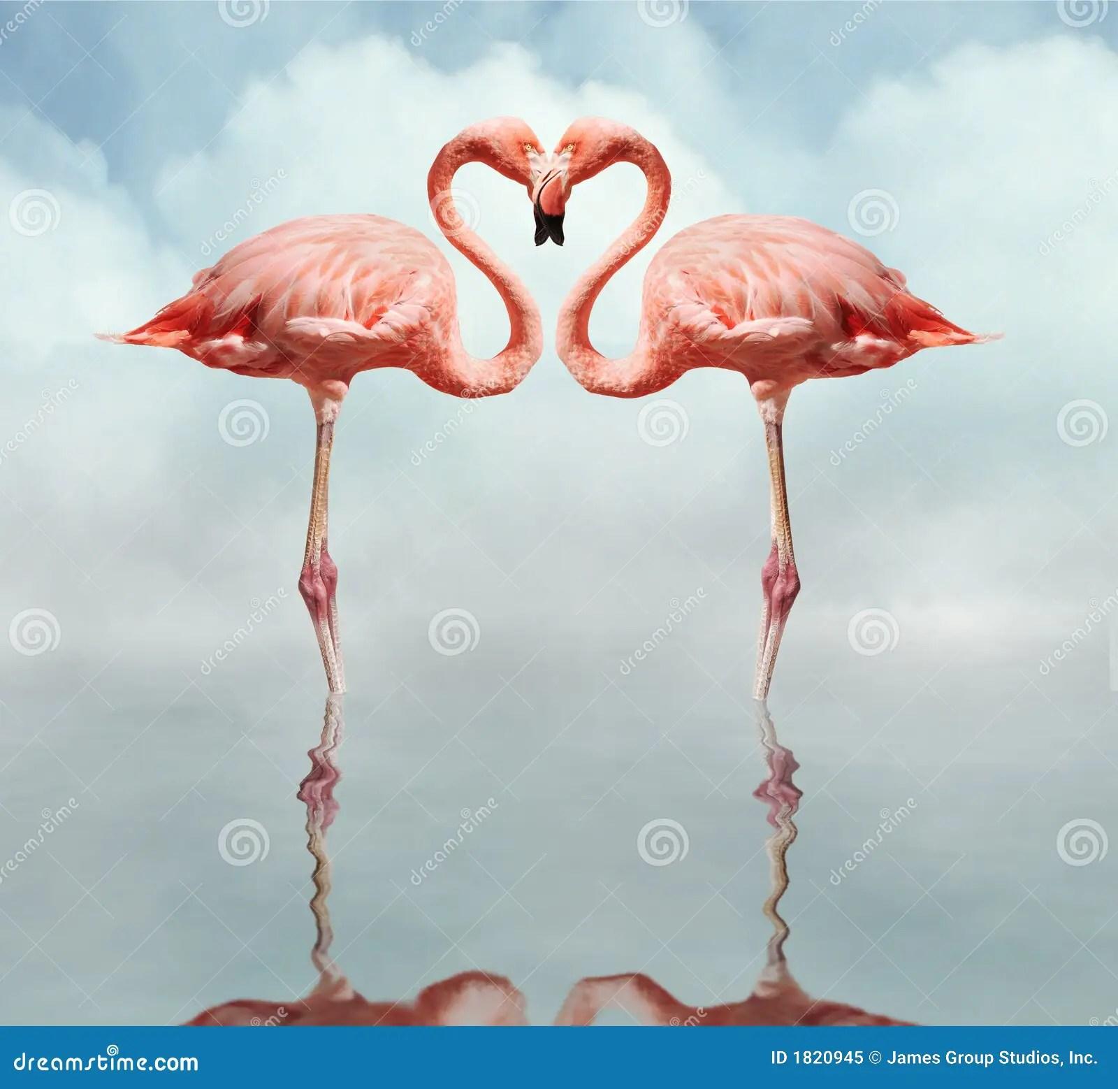 Love Birds stock image Image of feathers tacky aviary