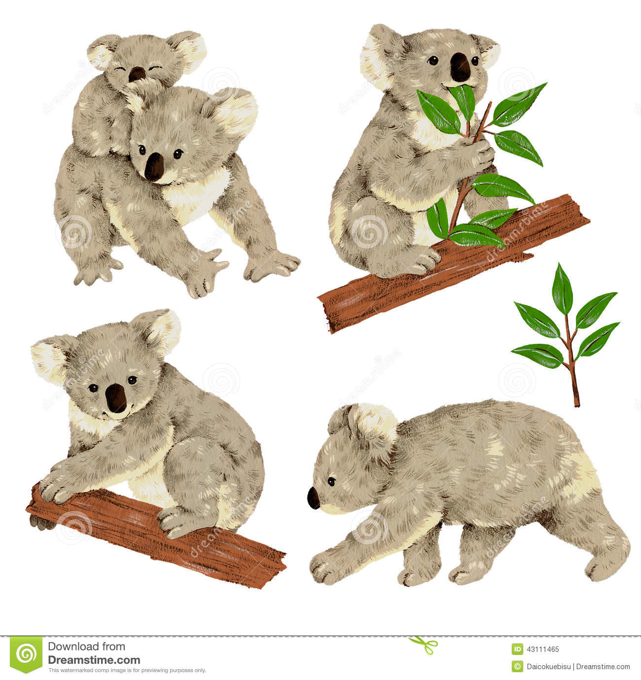Lovely Koala Stock Illustration Image 43111465