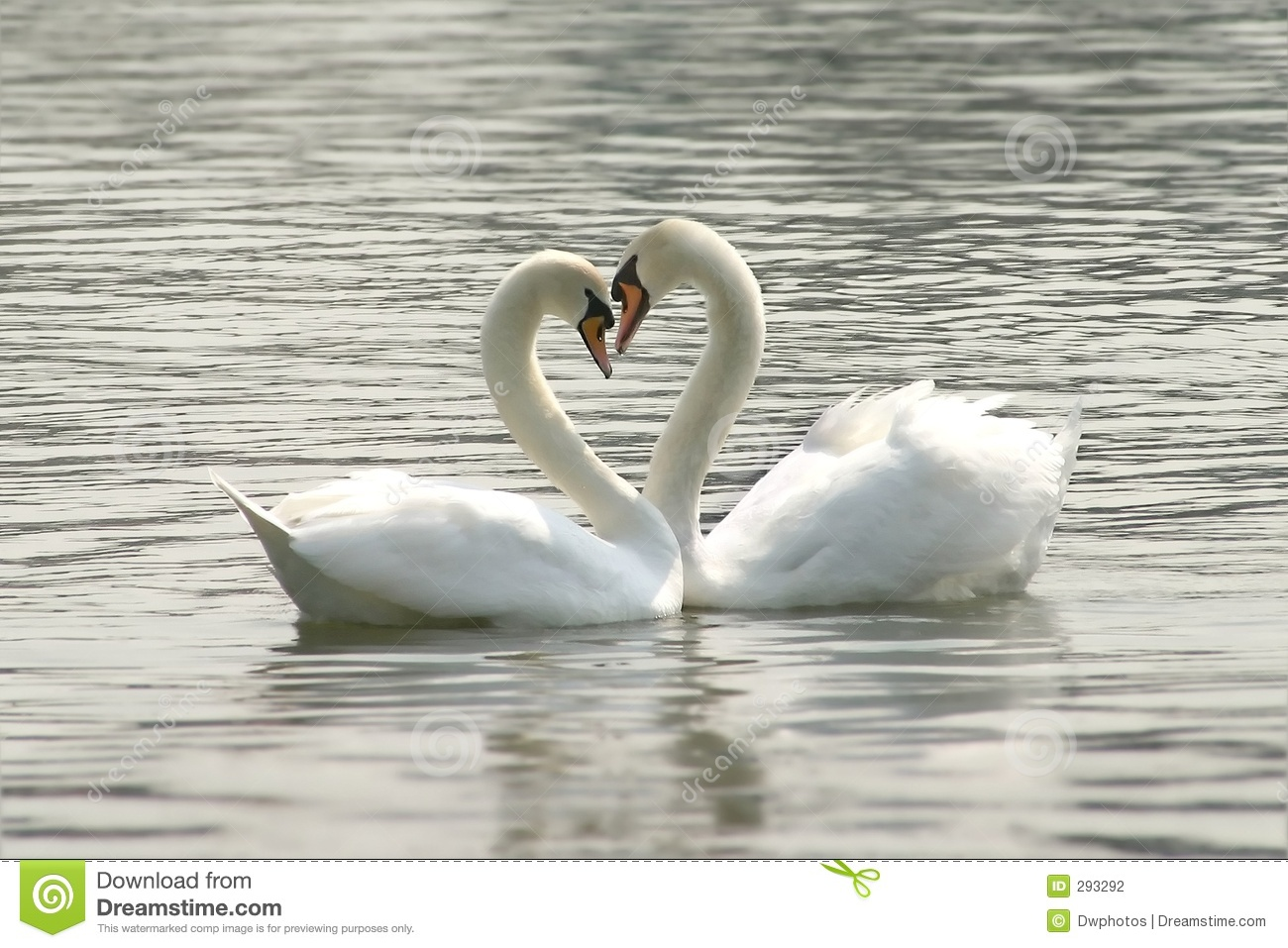 Cute Baby Love Couple Hd Wallpaper Loving Swans Stock Photography Image 293292