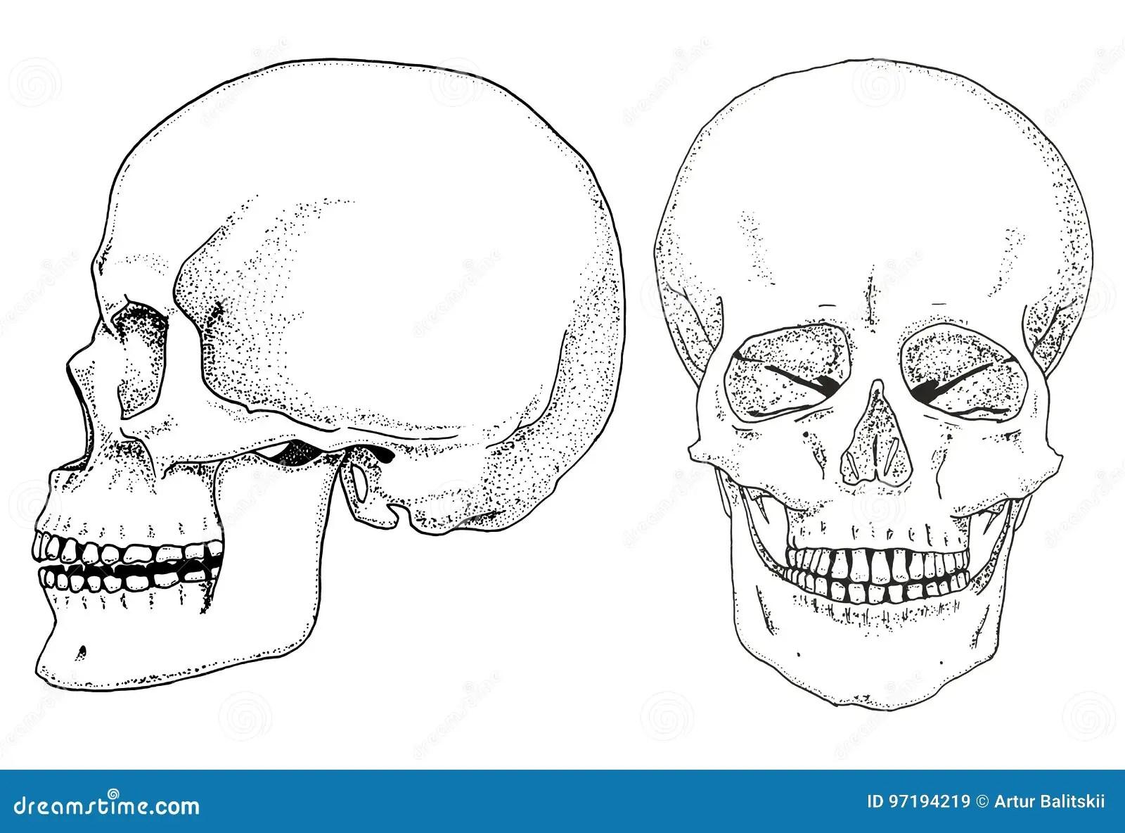 Ludzka Biologia Anatomii Ilustracja Graweruj Ca R Ka