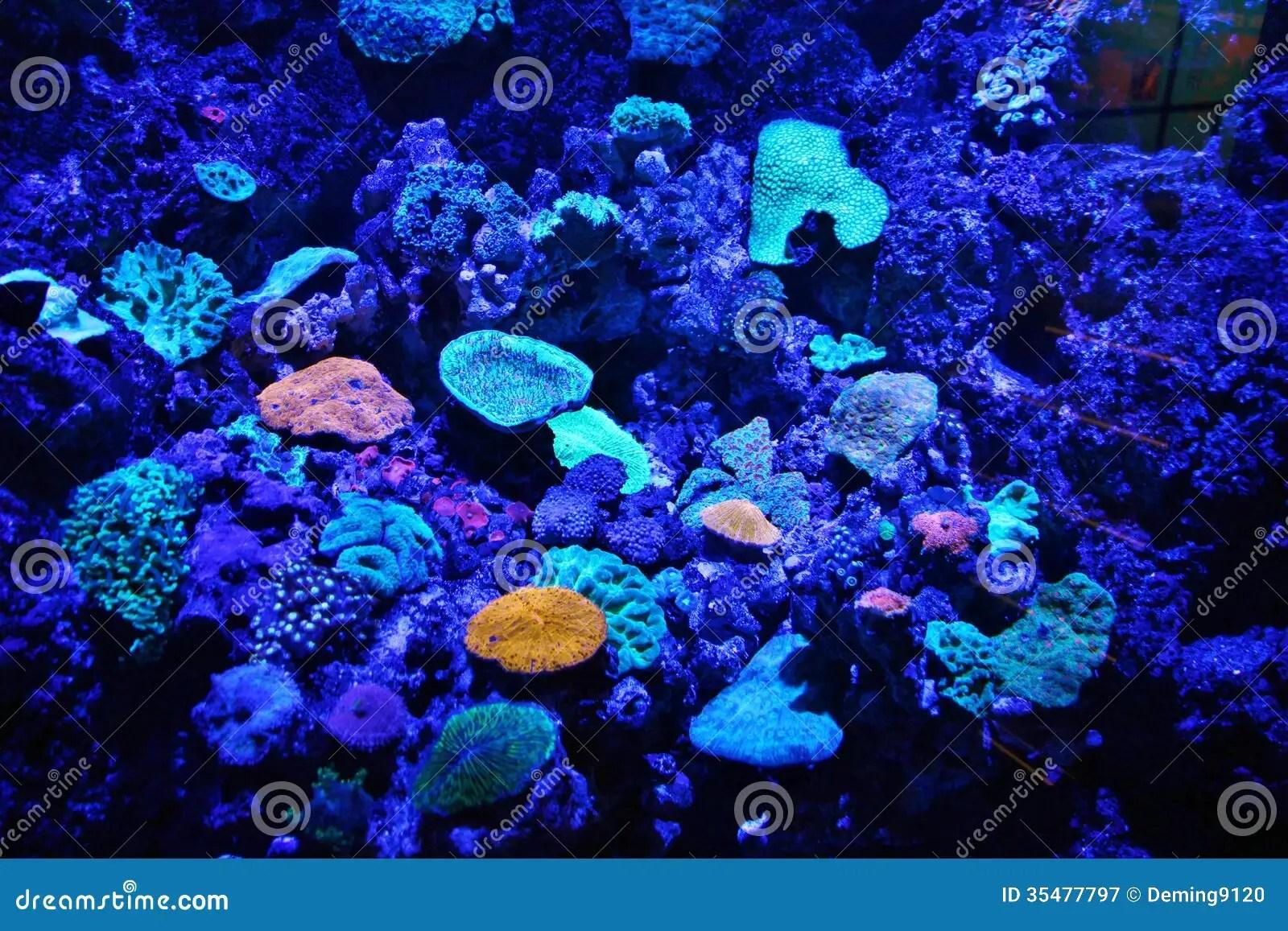 Fish Tank Water Plants